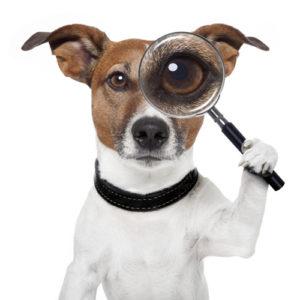 Solución de problemas de conducta en perros.