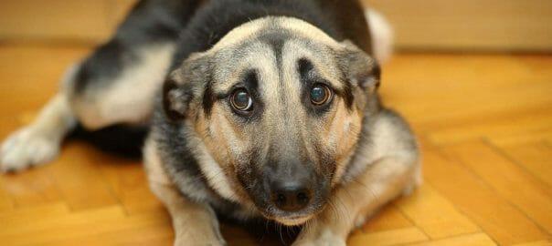 Aprender el lenguaje de los perros