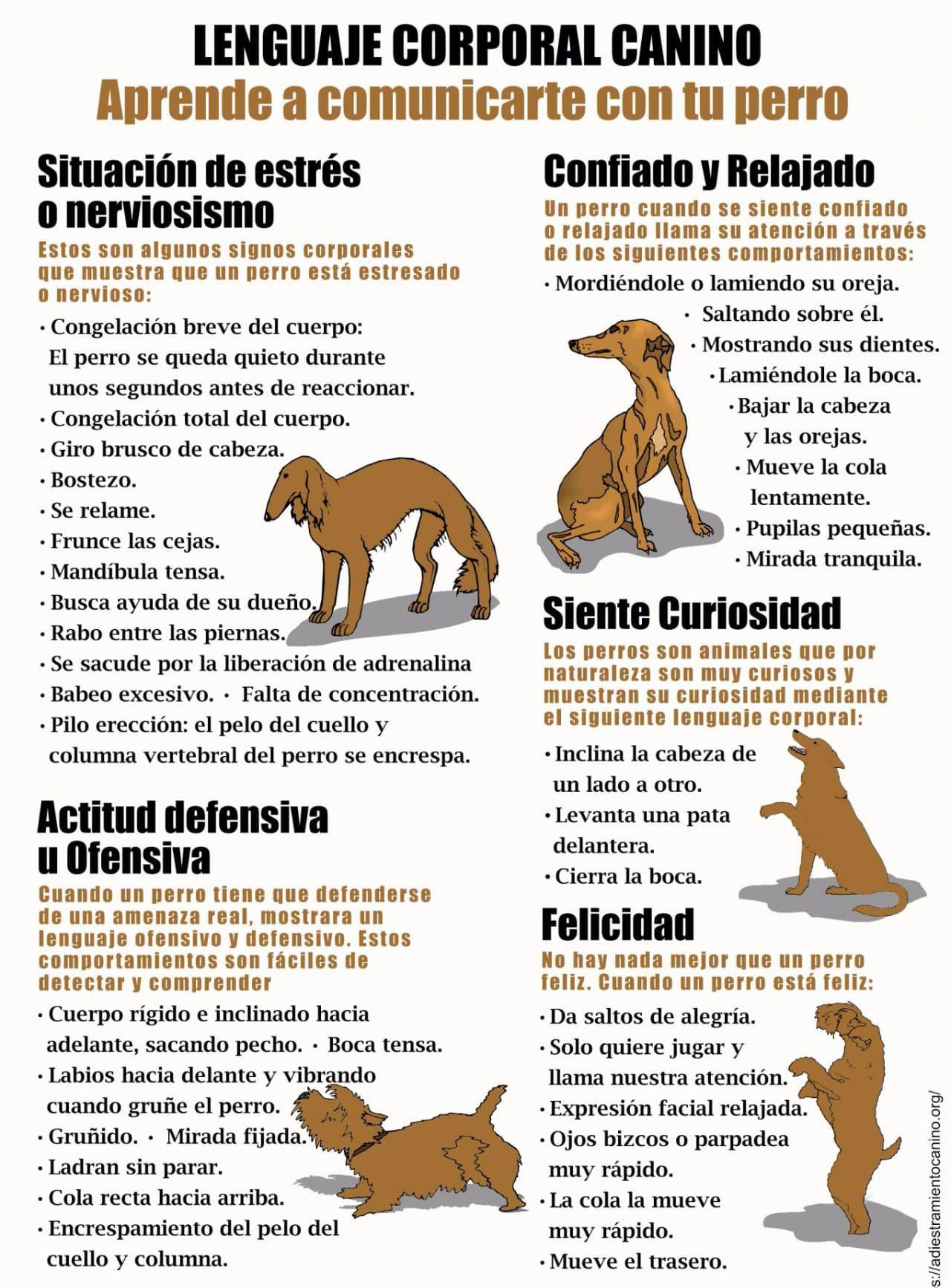 Comportamientos y conductas en perros y perras