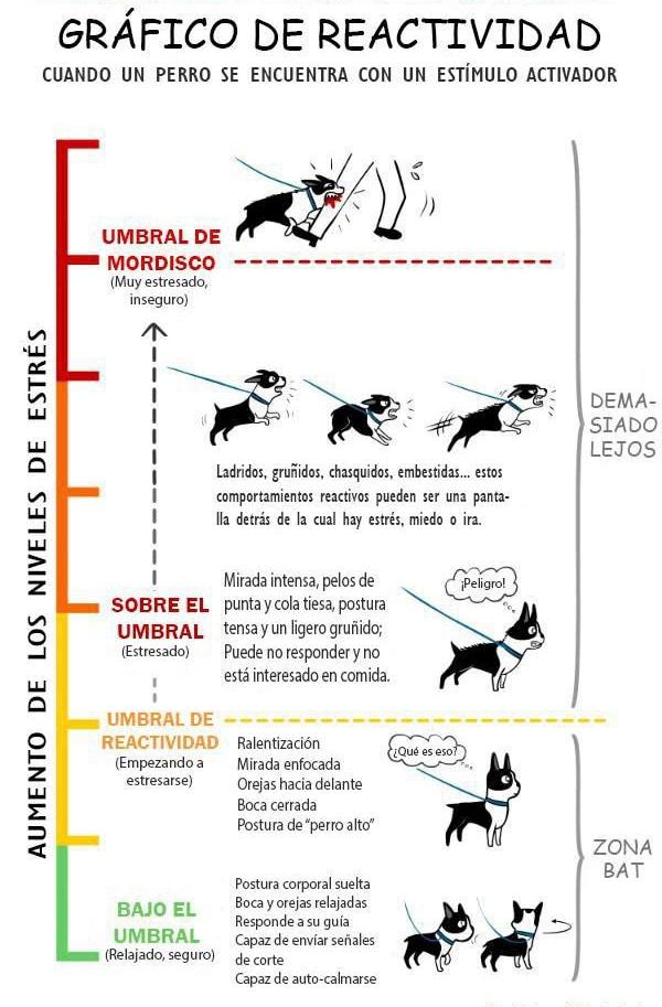 Aprende los niveles y corporalidad de tu perro perra