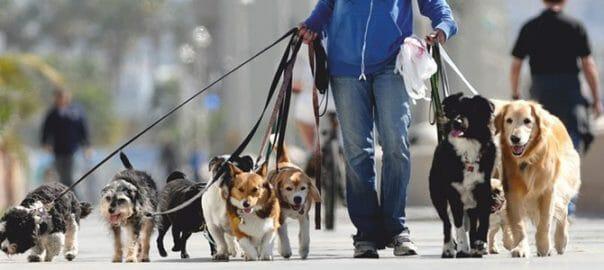 Paseador de perros Capital Federal Palermo Recoleta Barrio Norte Barrio Parque