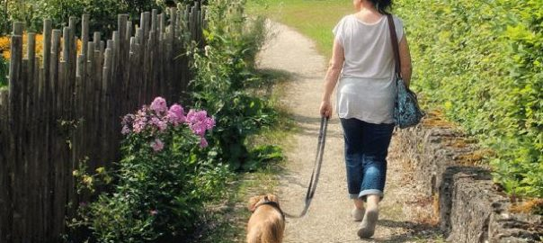 Enseñarle a pasear a mi perro