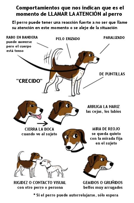 Comportamientos de perros y perras