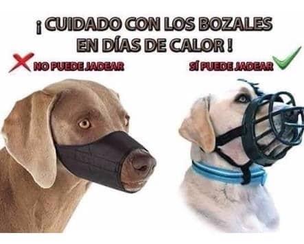 bozal para perros canasta de cuero
