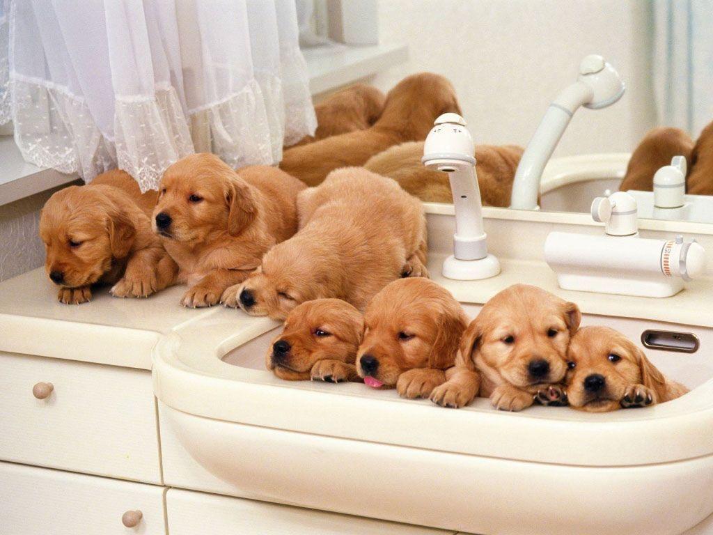 Trucos para bañar a perros